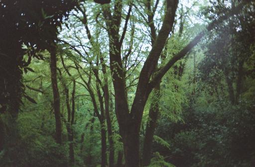 Wood Spirit 2002