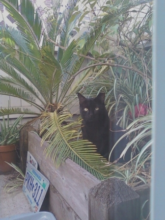 Onyx the Feral Cat